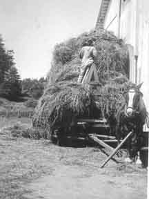 Rush Dolson haying